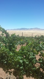 Vines and mountains in Sonoita, at Hops N' Vines